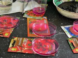 Фото дезинфекции посадочного материала помидоров, priusadebka.ru