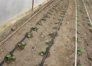 Способы орошения почвы