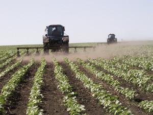 На фото - возделывание сахарной свеклы, farming.by