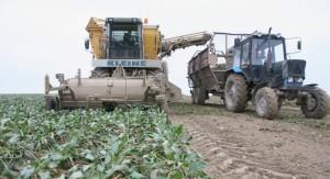 На фото - урожайность сахарной свеклы, minsk-region.gov.by