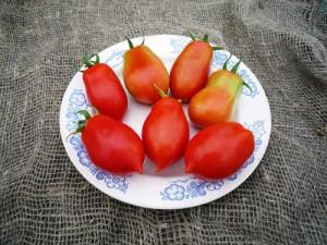 Фото помидоров сорта San Marzano, fotki.yandex.ru