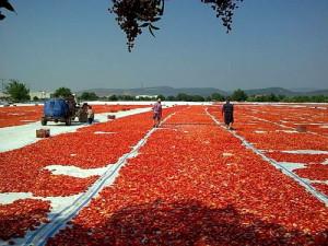 Фото сушеных на солнце помидоров, ribchansky.com