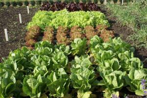 Сентябрьские работы в саду и на огороде