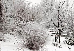 Чем заняться на участке с приходом зимы?