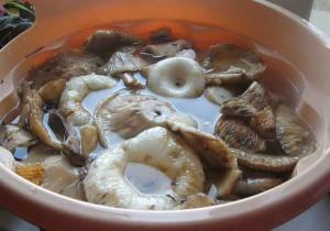 Особенности маринования и подготовки грибов