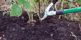 Как обрезать малину на зиму – важные советы садоводам