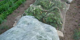 Подготовка садовой клубники к зиме