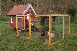Как построить сарай для кур несушек своими руками? - Greenologia 39