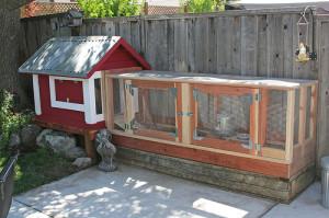 Как построить сарай для кур несушек своими руками? - Greenologia 70