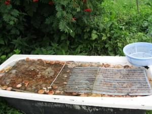 Фото замачивания грибов в ванной, forum.ihunter.ru
