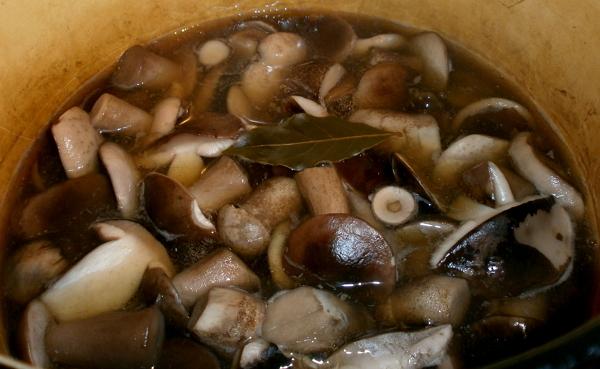 Надо ли варить белые грибы