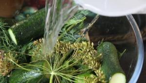 На фото - засолка огурчиков в минеральной воде, cooksa.ru