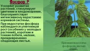 Фото необходимости фосфора для растений, 5klass.net