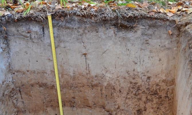 На фото - дерново-подзолистый тип почвы