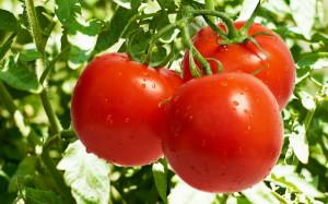 На фото - томаты, dom-sad-og.ru