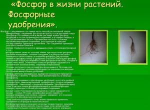 На фото - фосфор в жизни растений, myshared.ru