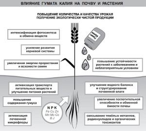 На фото - влияние калия на развитие растений, gumat.in.ua