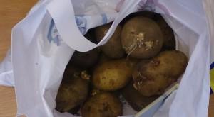 Фото пророщенного в пакетах картофеля, intermonitor.ru