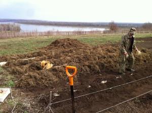 На фото - посадка картошки вручную «под лопату», 7dach.ru