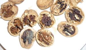 На фото - чересчур высушенные грецкие орехи, greeninfo.ru