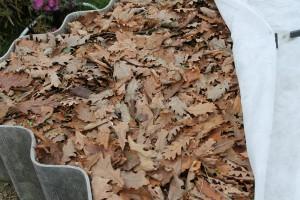На фото - листья дуба для компостной кучи, gardening.kittens-world.ru