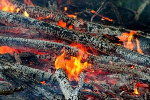 На фото - сжигание веток больных деревьев, umhoz.com