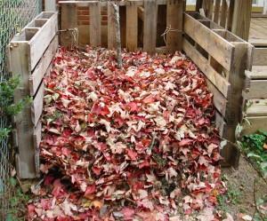 Фото опавшей листвы для компоста, homester.com.ua