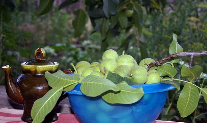 На фото - сбор грецких орехов