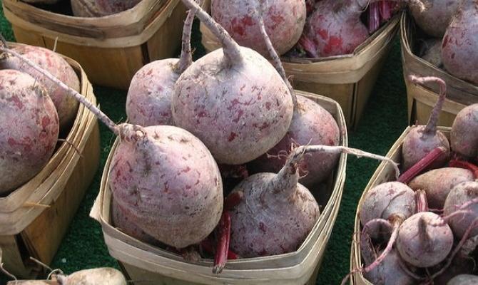 Попробуем вырастить достойный корнеплод фото