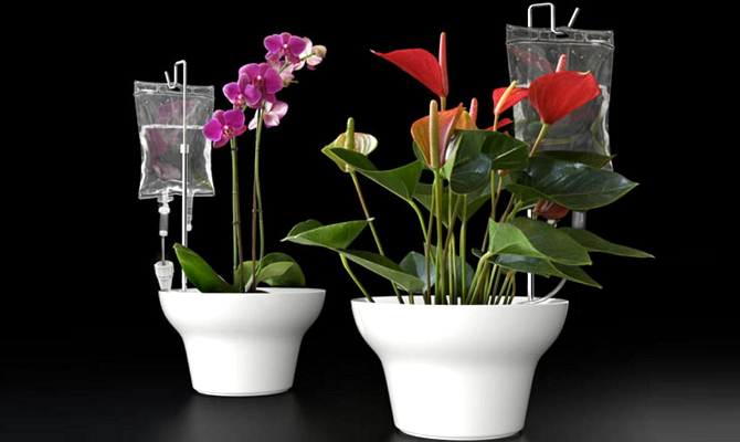 Автоматический самодельный полив домашних растений из капельниц