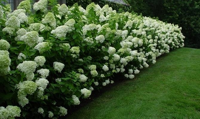 Сажаем кустарники, чтобы сад цвел круглый год фото
