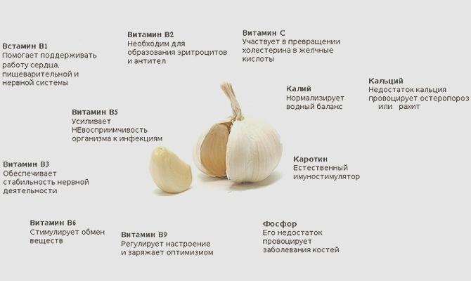 Какие полезные свойства есть у чеснока?