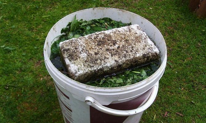 Фото жидкой подкормки из зеленой массы сорняков