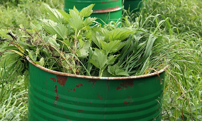 На фото - зеленая масса из нарубленных сорняков