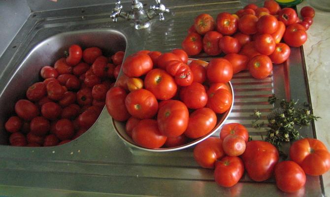 Крепкие томаты для засолки в бочке