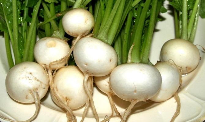 Здоровые неповрежденные корнеплоды
