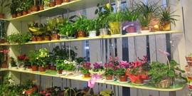 Уход за комнатными цветами – создаем все условия для растений