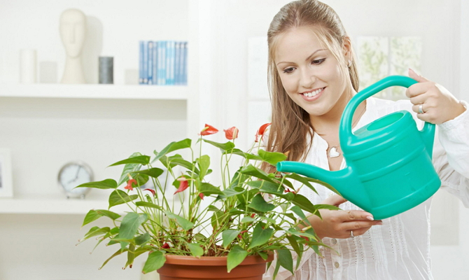 Что нужно учесть при посадке домашних цветов? фото