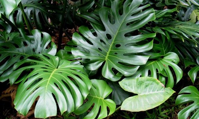 Естественное и искусственное освещение для домашних растений
