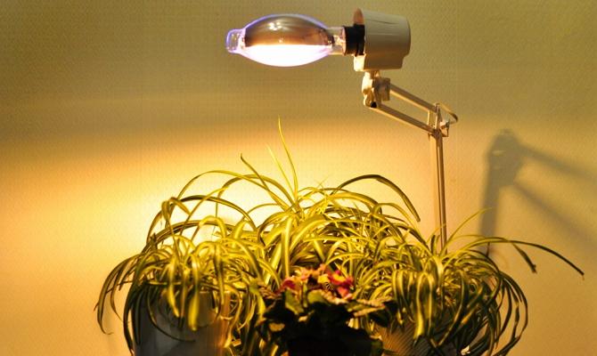 Естественное и искусственное освещение для домашних растений фото