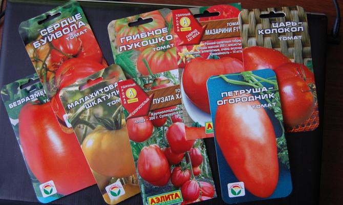 Подбор семян помидор