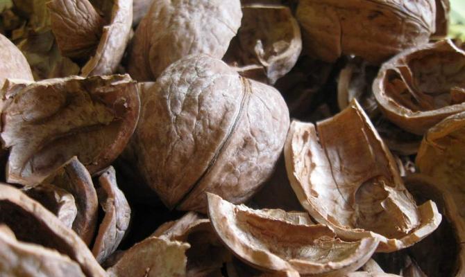 Что может нам предложить ореховая скорлупа