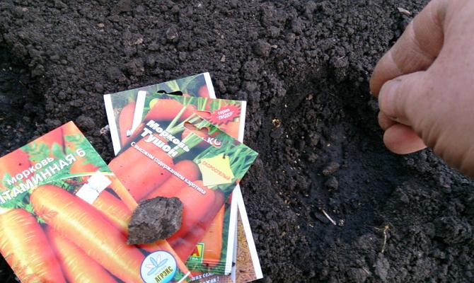 Как и когда сажать морковь семенами в  356