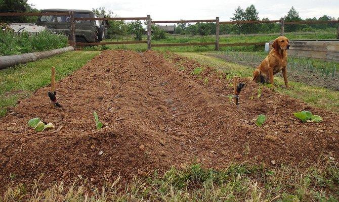 Когда и как сеять – практикуем подзимний посев