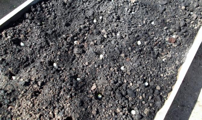 Высадка мелких луковиц