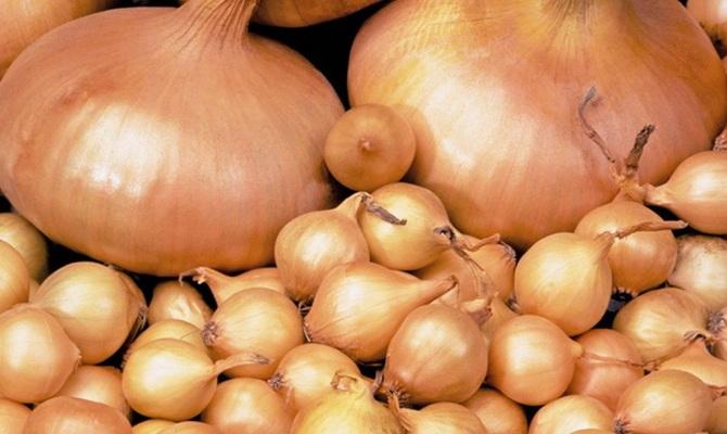 Озимые сорта лука-севка