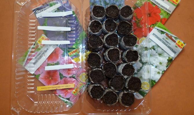 Выращивание рассады в таблетках