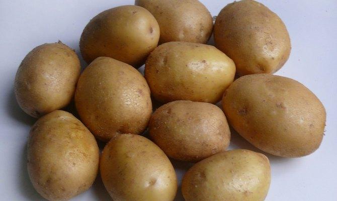 Клубни картофеля Джелли