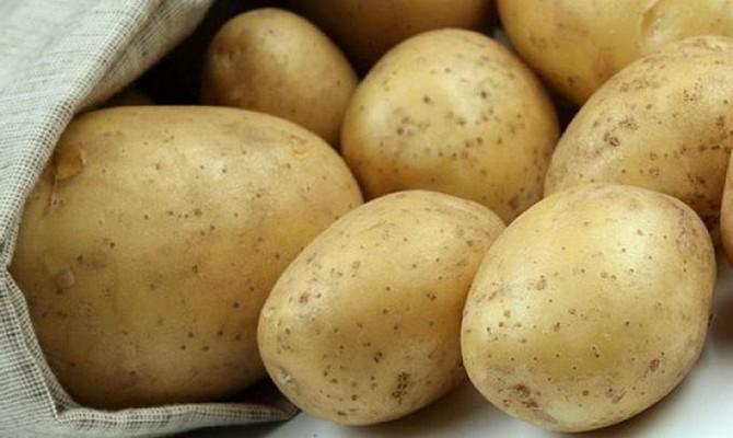Картофель сорта Лилея