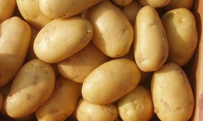 Клубни картофеля сорта Лилея